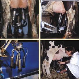 Avantajele mulgatorilor in procesul de prelucrare a laptelui