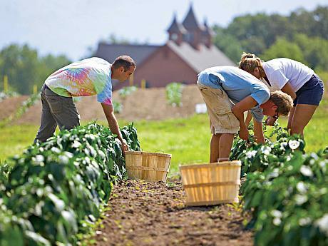 Avantajele si dezavantajele agriculturii conventionale